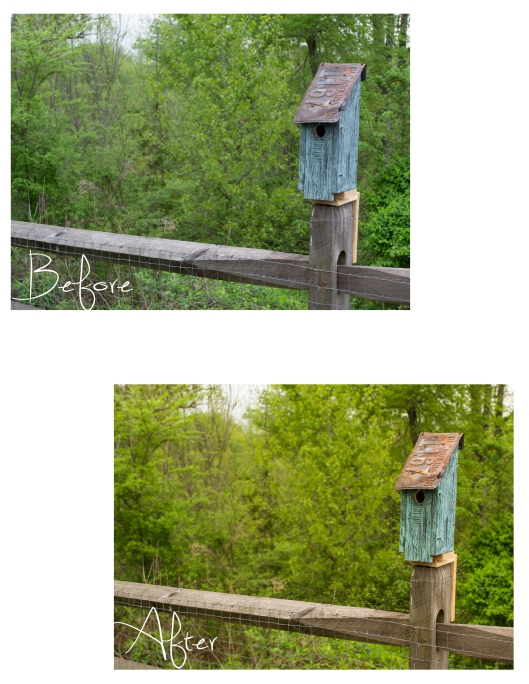 Birdhouse before and after