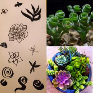 succulent motif - mark making